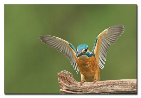 My Wings!!