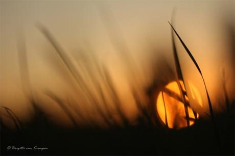 the Last summer sun