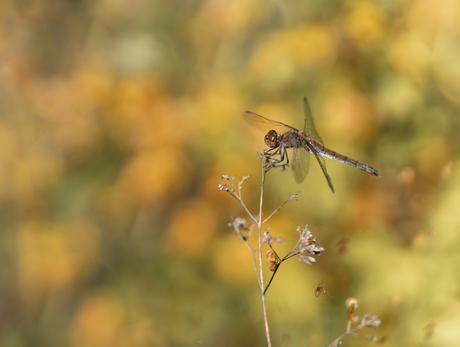 Bruinrood met een vleugje herfst