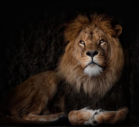 Koning met snotneus