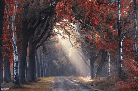 Peek through autumn