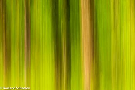 bomen kleur-1