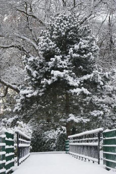 Een prachtige boom bedekt met Sneeuw