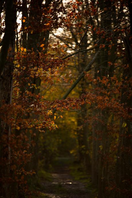 Ochtendlicht valt door een donker herfstbos, prachtig!