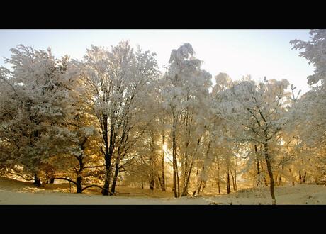 Winterse Bomenrij