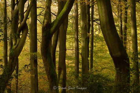 Magic Trees