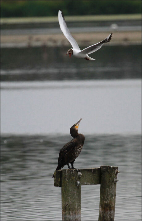 birds meet