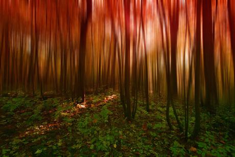 rood bos half blur