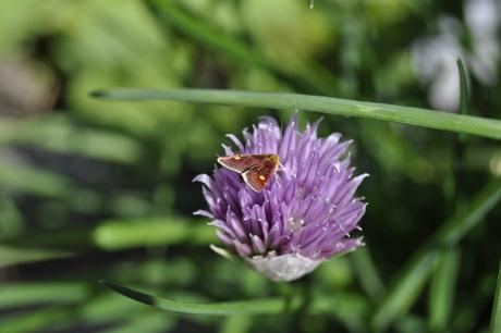 een soort mot of vlinder?
