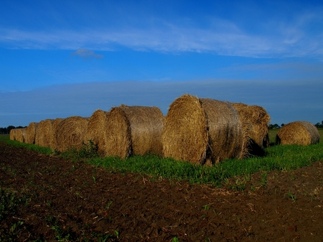 Harvest....