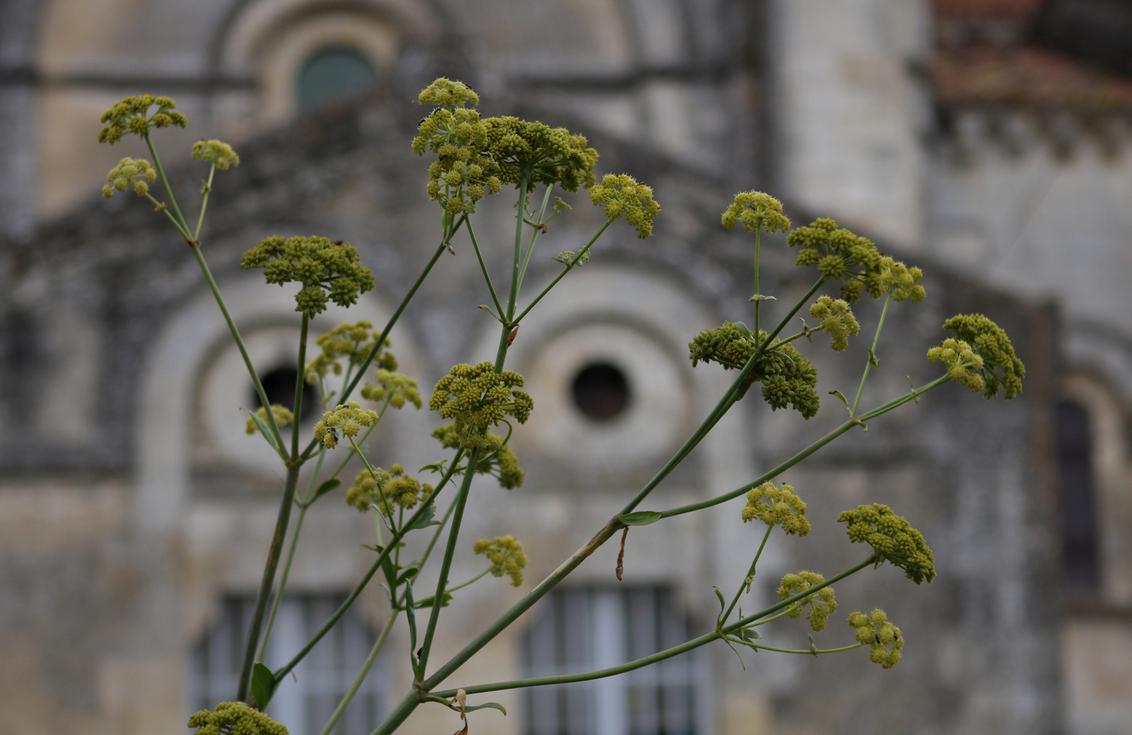 Mooi kerkje - alleen daar ging het hier niet om. - foto door petervanmeurs op 30-09-2010 - deze foto bevat: plant, bloem, kerk, petervanmeurs, Vouvant