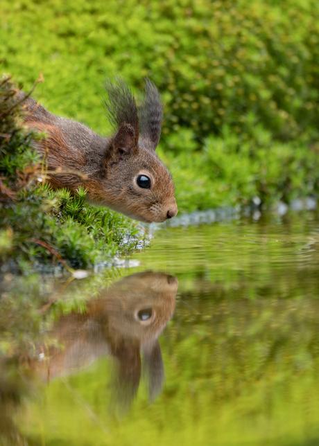 Double squirrel