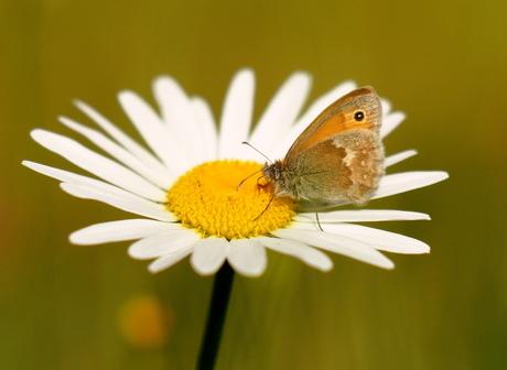 Juiste bloem/vlinder