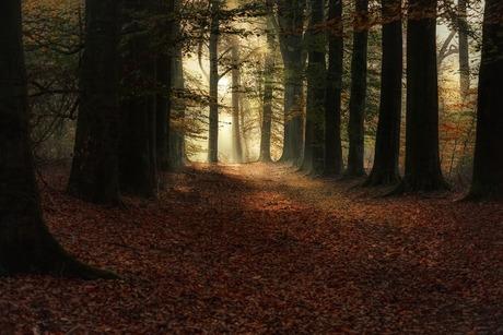 Herfst sfeer
