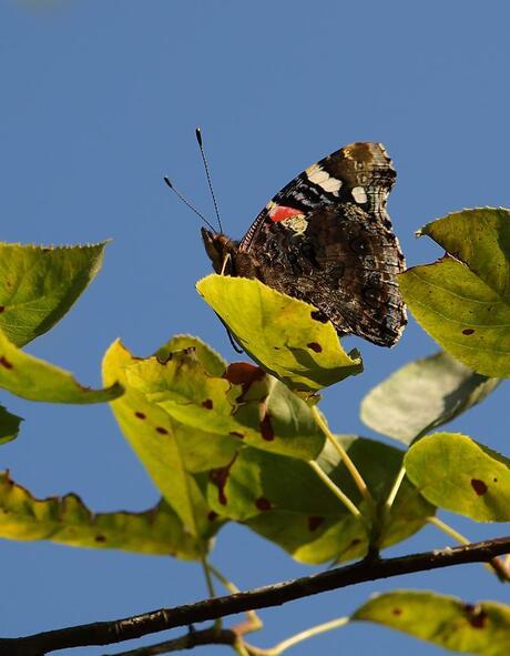 vlinder zit hoog en droog