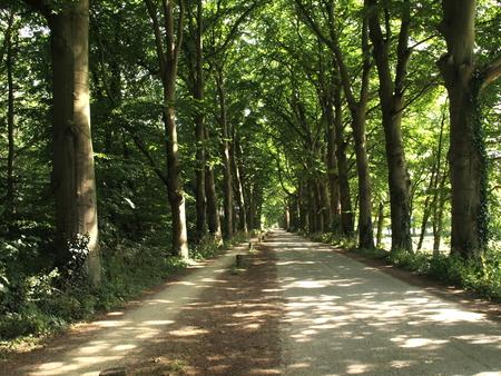 bomenlaan - tot in de verte - foto door Gooiseroos op 23-06-2017 - deze foto bevat: zon, natuur, licht, landschap, schaduw, bos, zomer, bomen, verte, weg, laan, bomenlaan