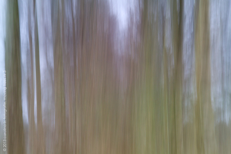 moving trees no 3