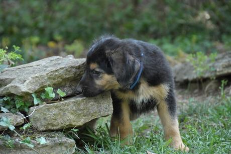 pup op ontdekking