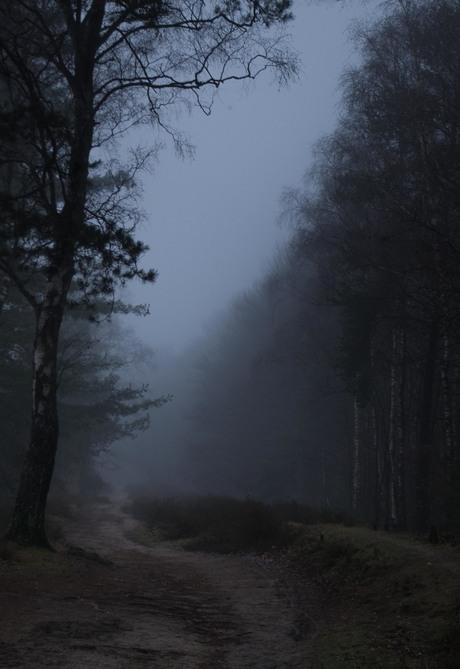 foggyforest2