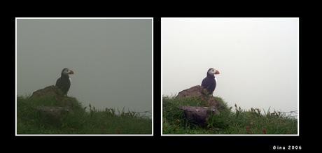 De mist in.....
