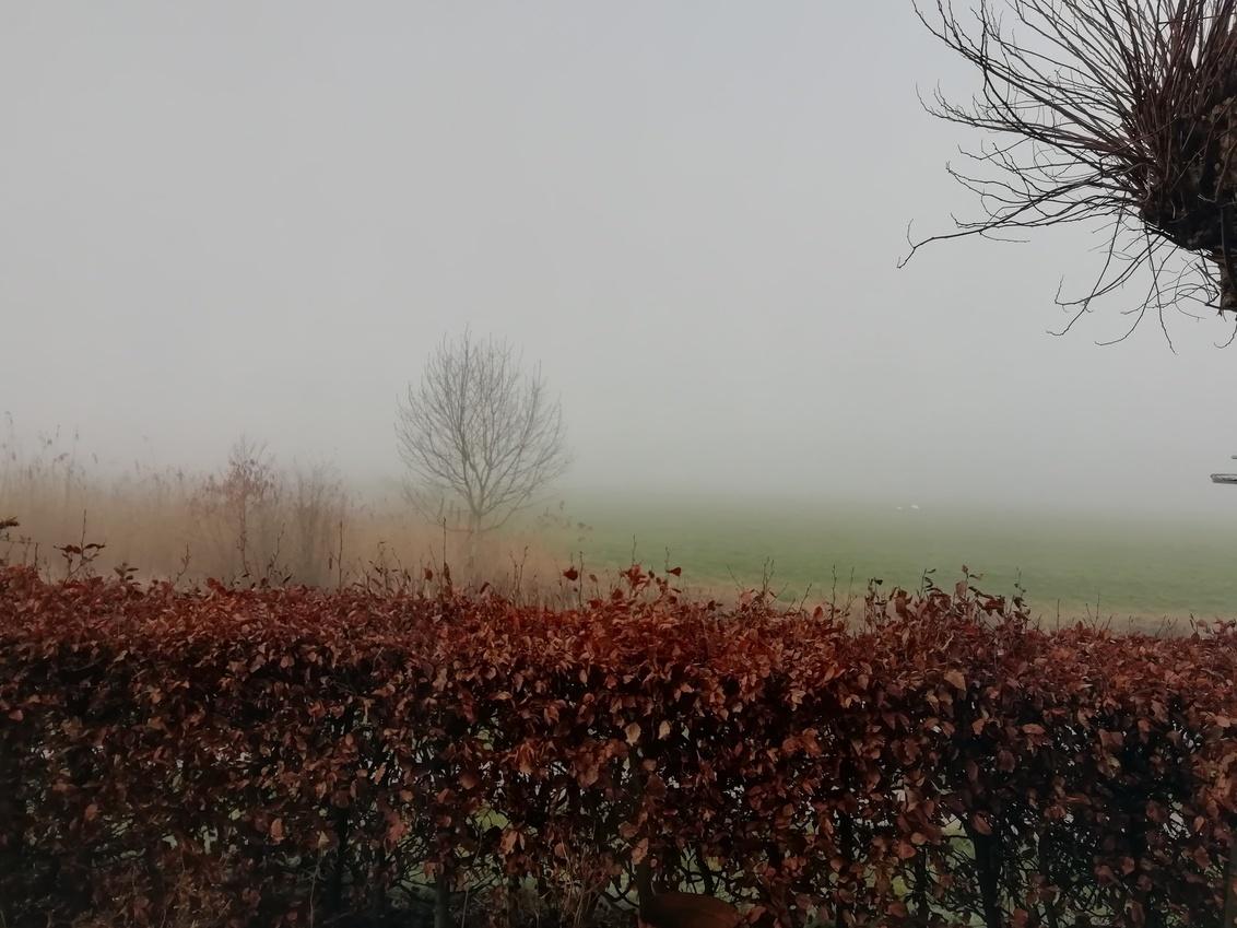 Wazige zaterdagochtend - Een mistige ochtend, langzaam laten de schapen zich zien. Zwolle 5 maart 2020 - foto door Koosje8 op 04-03-2021 - deze foto bevat: lente, mist, zonsopkomst
