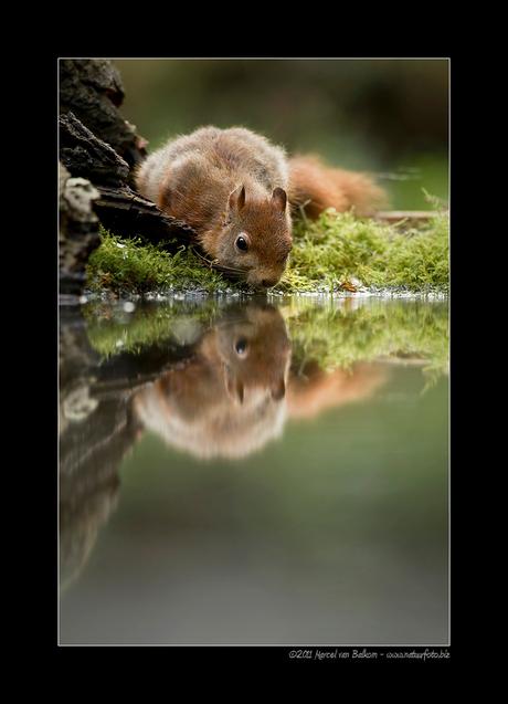 spiegeltje spiegeltje