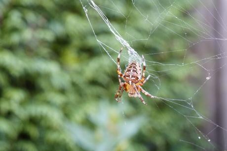 spin in verkreukeld web