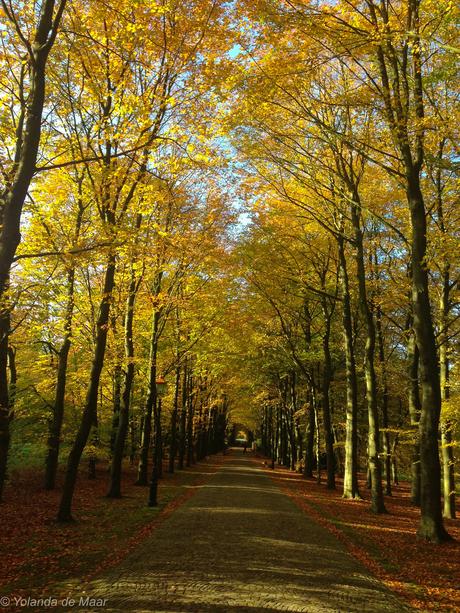 Herfst op de Paltz