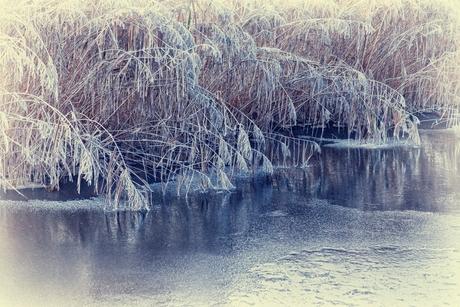 winter riet