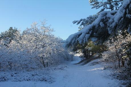 Winter 2015 jan 2015-01-30 048