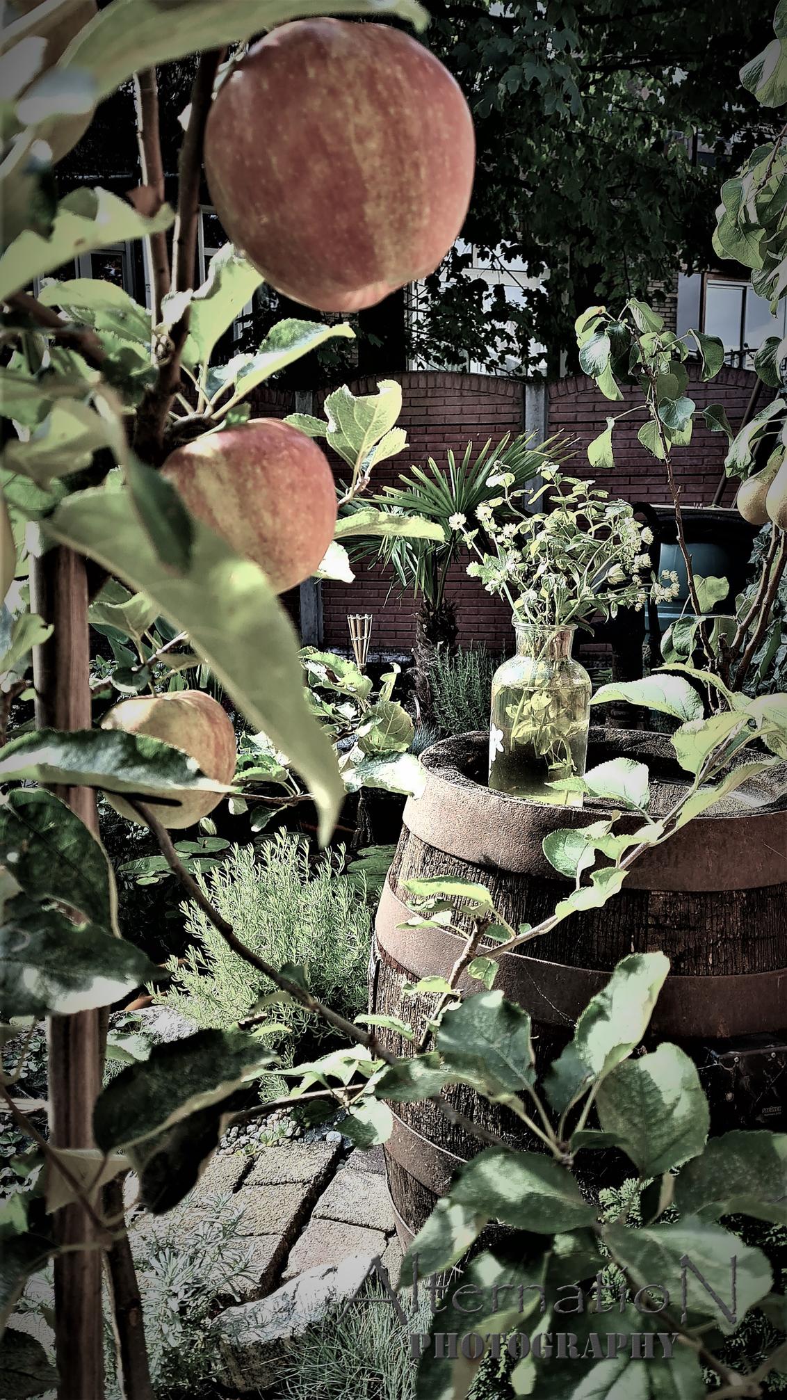 Tutti Frutti - - - foto door AlternatioN photography op 28-09-2020 - deze foto bevat: groen, rood, kleur, zon, boom, bloem, abstract, water, natuur, geel, licht, herfst, tuin, blad, appel, schaduw, culinair, nederland, peren, details, appelboom, perenboom, stadstuin