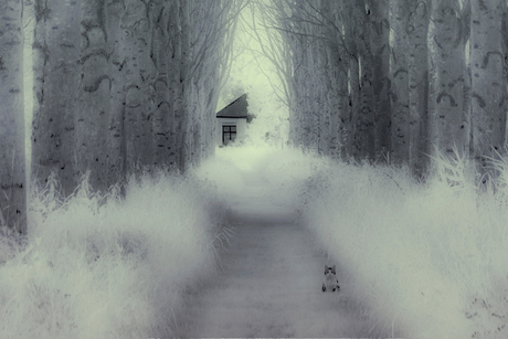 de kat infrarood