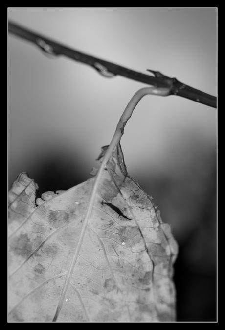 Herfst in zwart-wit