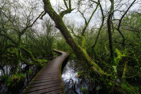 De groene natuur in Nederland - De groene natuur in Nederland. Een prachtig pad omgeven door groen. - foto door stevendijk3 op 15-04-2021 - locatie: 's-Hertogenbosch, Nederland - deze foto bevat: natuur, landschap, pad, bomen, water, lucht, fabriek, boom, hout, natuurlijk landschap, fluviatiele landvormen van beken, kofferbak, waterloop, bank