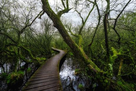 De groene natuur in Nederland