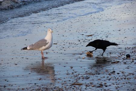 Smakelijk hapje - Deze foto is er één uit een hele serie die ik eergisteren gemaakt heb in Katwijk aan Zee. Twee vogels strijden hier om een smakelijk hapje, waarbij d - foto door fotowilma op 17-01-2012 - deze foto bevat: zon, strand, zee, water, zonsondergang, zeemeeuw, vogel, silhouet, goud, katwijk, ondergaande zon