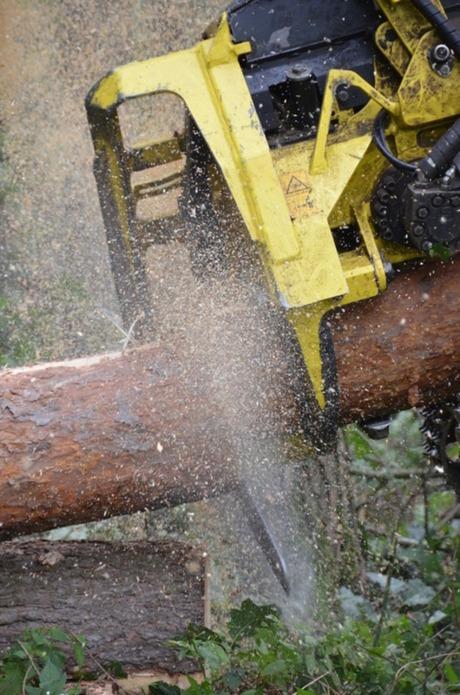 Bosbouw 2011