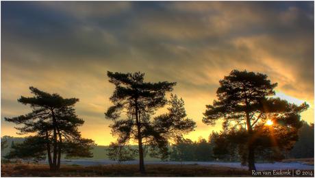 3 bomen