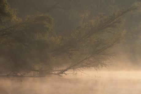 Meerkoetje in de Biesbosch