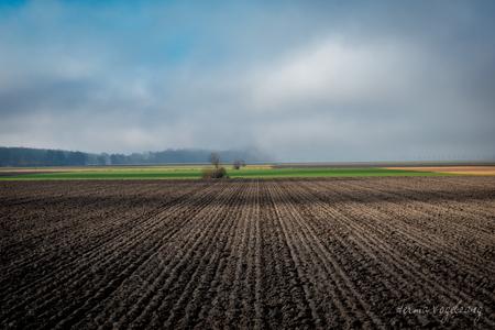 Droom landschap  - Deze foto is genomen bij het Wisentbos te Dronten. Het was mistig, de zon brak door. Ik vind zelf de kleuren icm de mist echt gaaf uitpakken. Inmidde - foto door littlebirdy op 11-04-2021 - deze foto bevat: natuur, akker, mist, landschap, boom, sfeer, kleur, sonyrx10m4, sonyrx10iv, lucht, wolk, natuurlijk landschap, fabriek, gras, landbouw, gewoon, grasland, landschap, grass familie