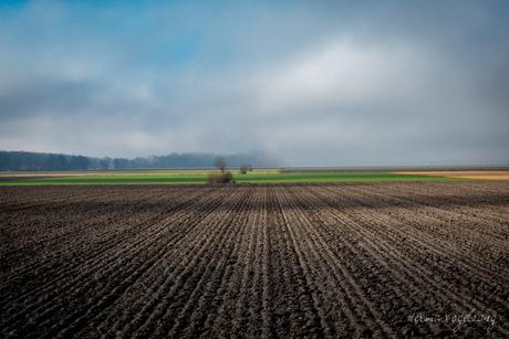 Droom landschap