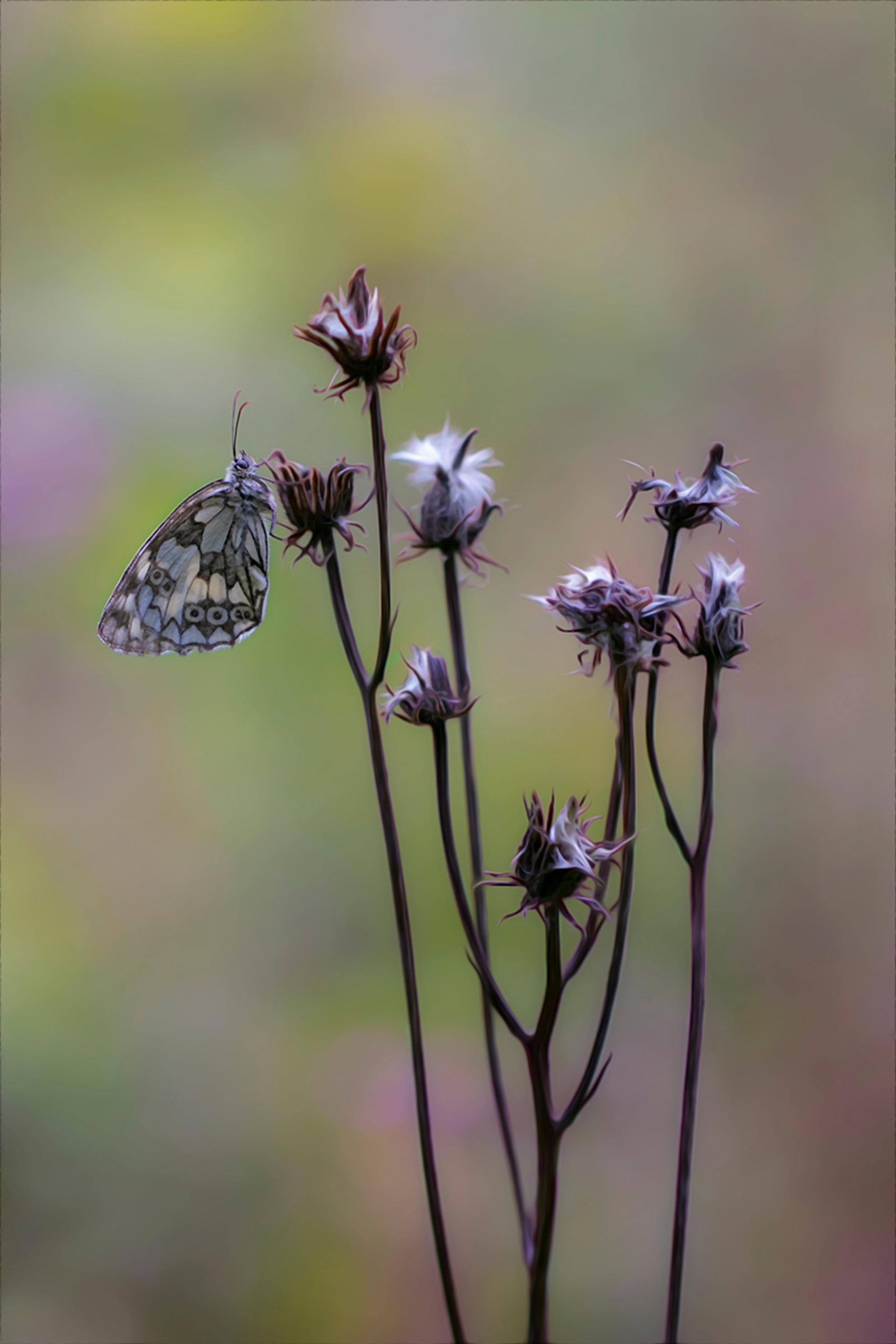 And i said to myself what a wonderful world - And i said to myself what a wonderful world. - foto door daan de vos op 22-07-2019 - deze foto bevat: groen, vlinder, geel, insect, dof, dambordje, bokeh