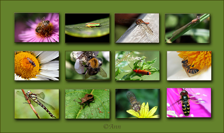 Insecten Collage