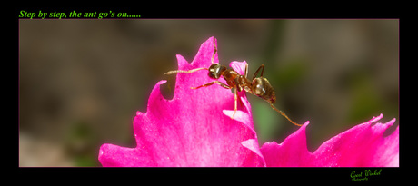 and the ant goes on......