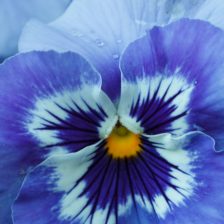 Macro Bloemen 4