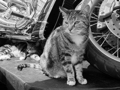 Katten bij motor