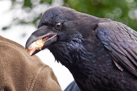 Hoezo, zangvogel.....