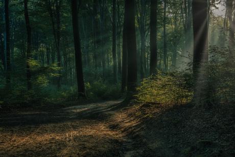 Het bos ontwaakt