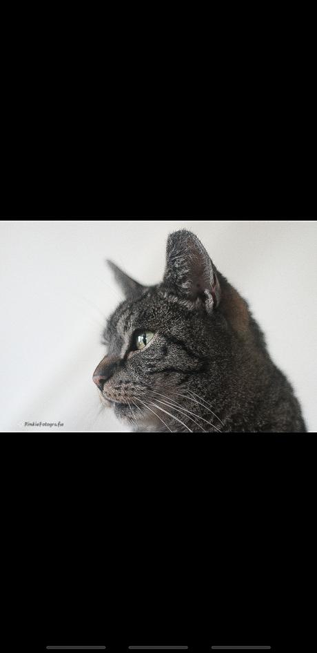 Cat Kat