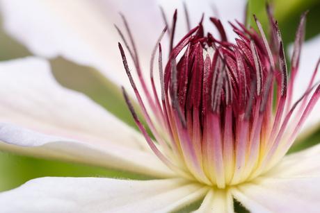 Macro Bloemen 3